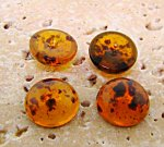 13mm. TORTOISE BROWN SPECKLE SHINY ROUND CABOCHONS - Lot of 48
